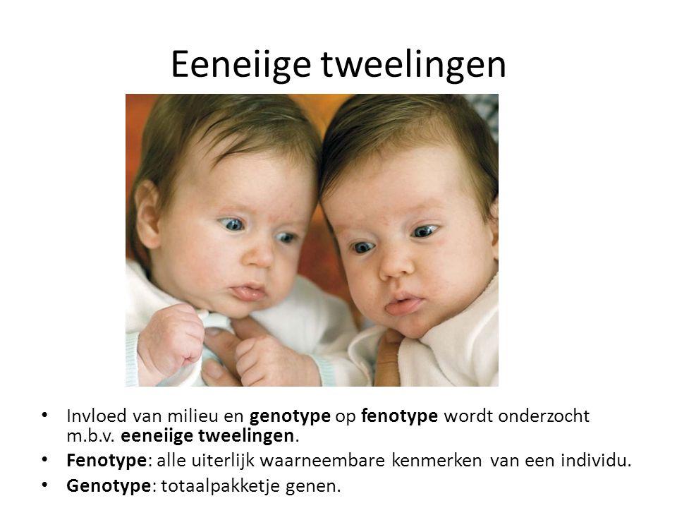 Eeneiige tweelingen Invloed van milieu en genotype op fenotype wordt onderzocht m.b.v. eeneiige tweelingen. Fenotype: alle uiterlijk waarneembare kenm