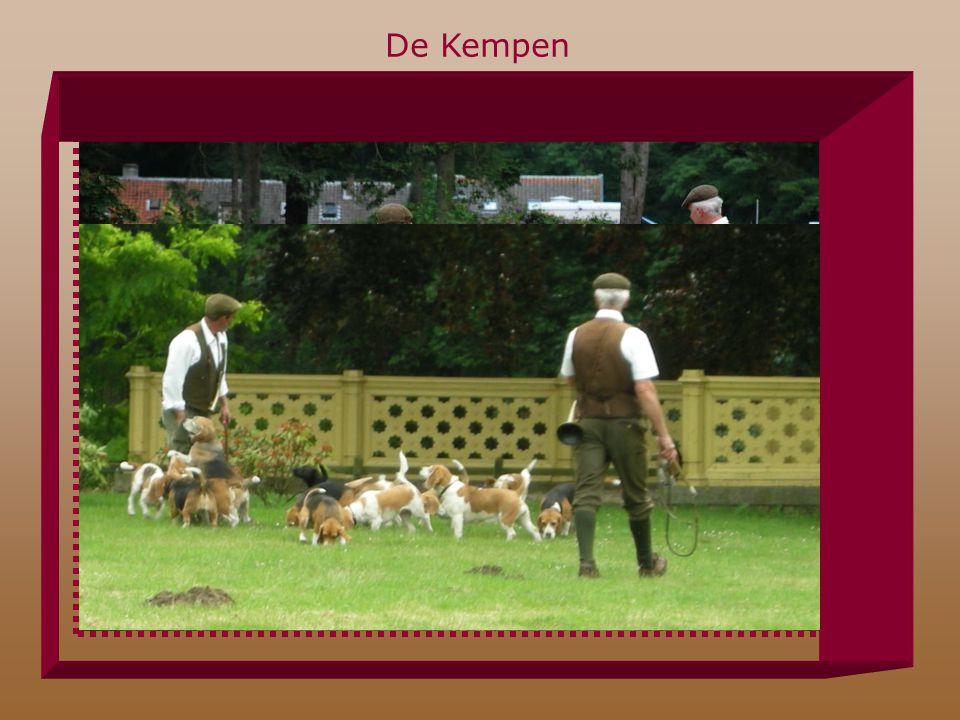 De Kempen Beagle