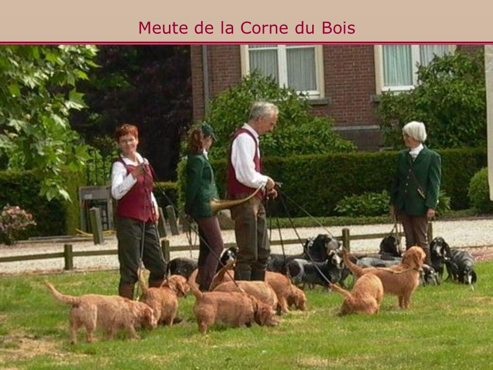 Meute de la Corne du Bois Basset Fauve de Bretagne