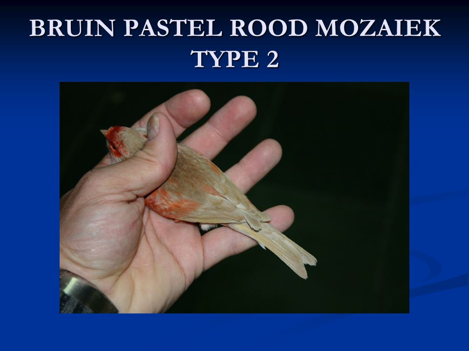 BRUIN PASTEL ROOD MOZAIEK TYPE 2
