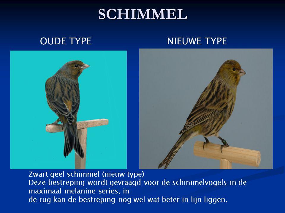 SCHIMMEL OUDE TYPE NIEUWE TYPE Zwart geel schimmel (nieuw type) Deze bestreping wordt gevraagd voor de schimmelvogels in de maximaal melanine series,