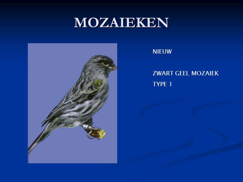 MOZAIEKEN NIEUW ZWART GEEL MOZAIEK TYPE 1