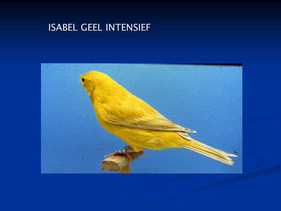 ISABEL GEEL INTENSIEF