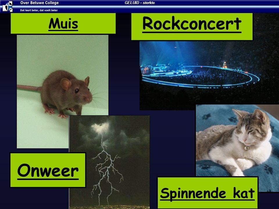 Muis Rockconcert Onweer Spinnende kat GELUID - sterkte