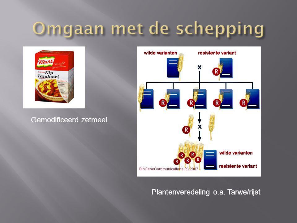 Gemodificeerd zetmeel Plantenveredeling o.a. Tarwe/rijst