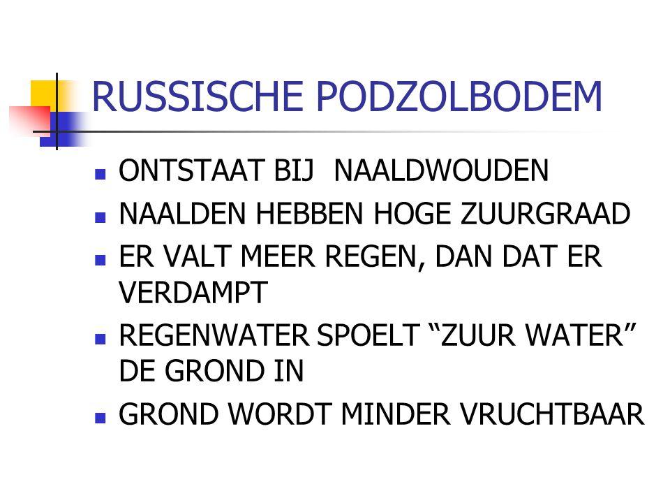 """RUSSISCHE PODZOLBODEM ONTSTAAT BIJ NAALDWOUDEN NAALDEN HEBBEN HOGE ZUURGRAAD ER VALT MEER REGEN, DAN DAT ER VERDAMPT REGENWATER SPOELT """"ZUUR WATER"""" DE"""