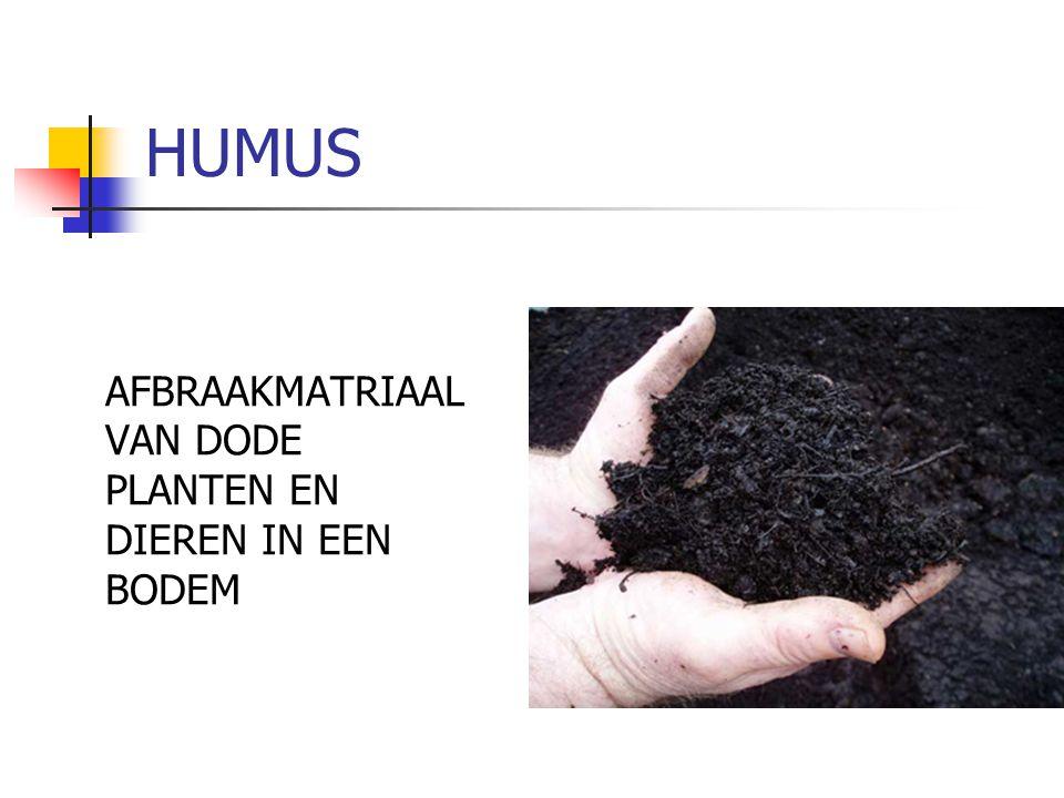 HUMUS AFBRAAKMATRIAAL VAN DODE PLANTEN EN DIEREN IN EEN BODEM