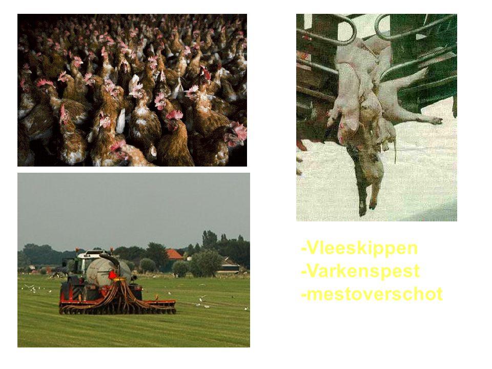 -Vleeskippen -Varkenspest -mestoverschot