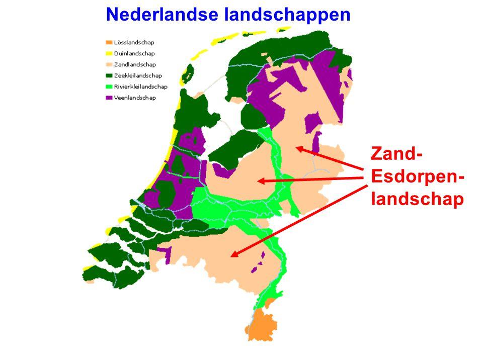 Het zandlandschap / esdorpenlandschap (19e eeuw) doorsnede potstal Hoge grondwaterstand.