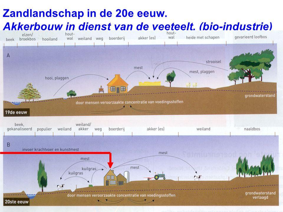 Zandlandschap in de 20e eeuw. Akkerbouw in dienst van de veeteelt. (bio-industrie)