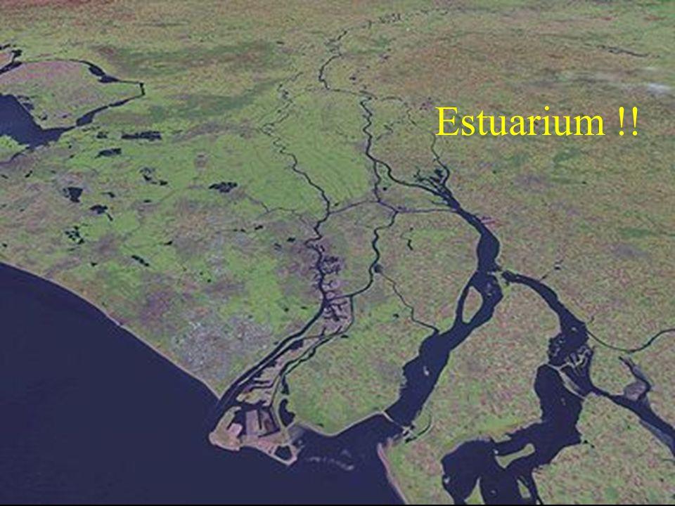 Estuarium !!