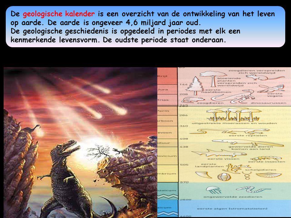 De geologische kalender Het Kenozoicum is de nieuwe tijd.