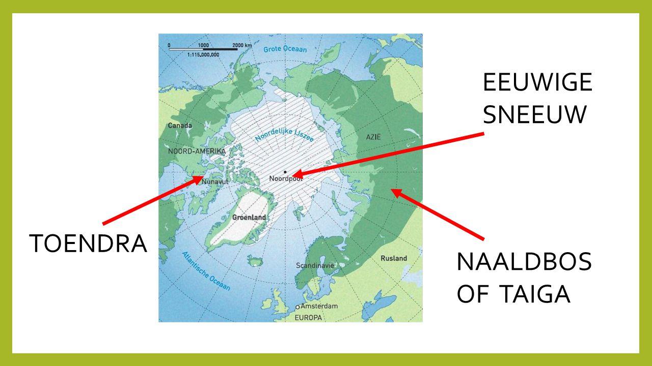 NAALDBOS OF TAIGA TOENDRA EEUWIGE SNEEUW
