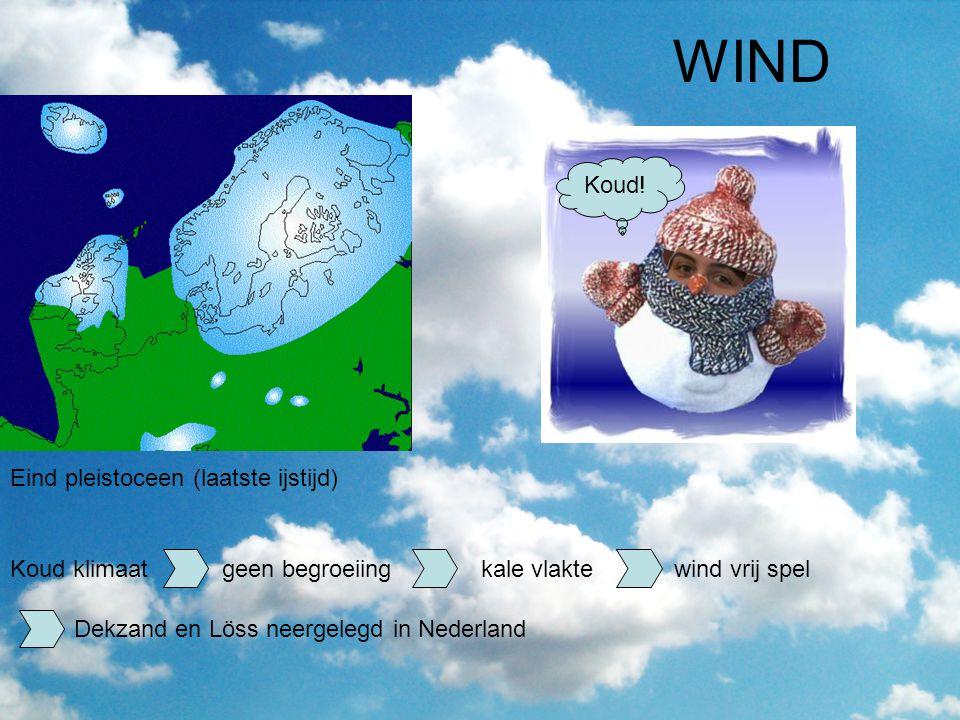 WIND Eind pleistoceen (laatste ijstijd) Koud klimaat geen begroeiing kale vlakte wind vrij spel Koud! Dekzand en Löss neergelegd in Nederland