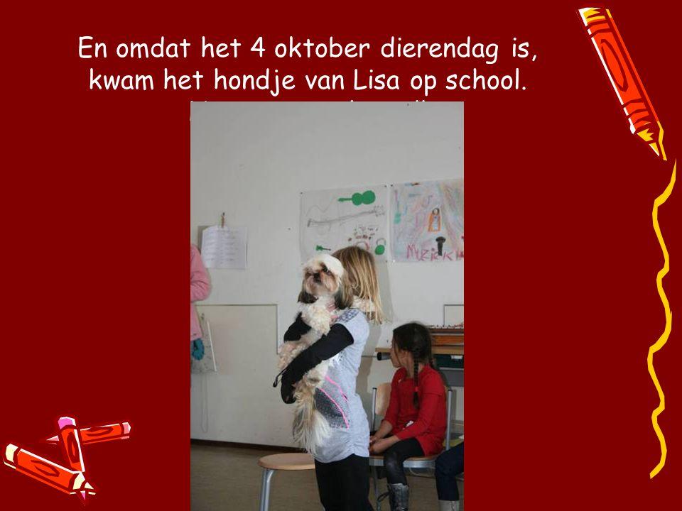 En omdat het 4 oktober dierendag is, kwam het hondje van Lisa op school. Het is een schatje!!