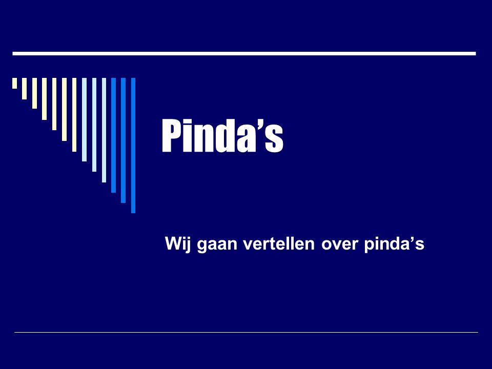 Pinda's Wij gaan vertellen over pinda's