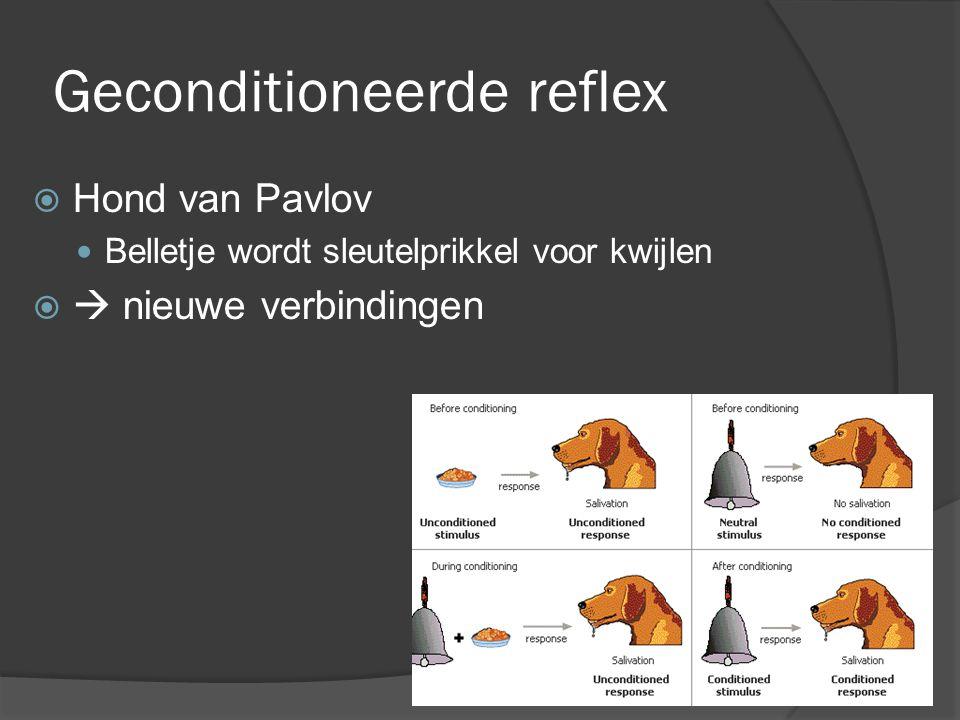Geconditioneerde reflex  Hond van Pavlov Belletje wordt sleutelprikkel voor kwijlen   nieuwe verbindingen