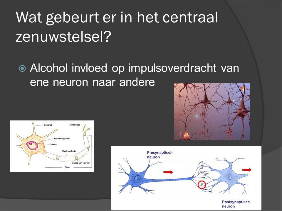 Wat gebeurt er in het centraal zenuwstelsel?  Alcohol invloed op impulsoverdracht van ene neuron naar andere