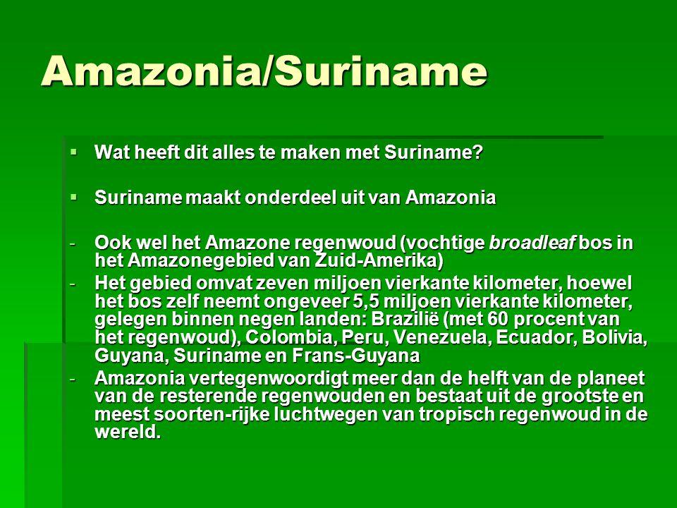 Amazonia/Suriname  Wat heeft dit alles te maken met Suriname?  Suriname maakt onderdeel uit van Amazonia -Ook wel het Amazone regenwoud (vochtige br