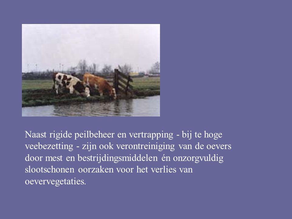 Naast rigide peilbeheer en vertrapping - bij te hoge veebezetting - zijn ook verontreiniging van de oevers door mest en bestrijdingsmiddelen én onzorgvuldig slootschonen oorzaken voor het verlies van oevervegetaties.