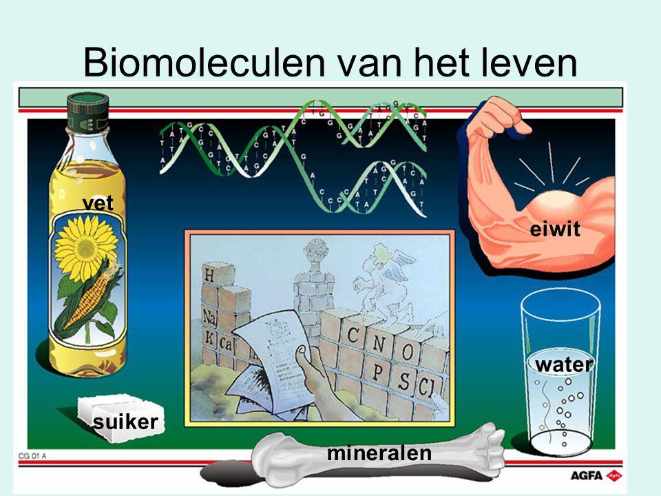 Biomoleculen van het leven eiwit water suiker vet mineralen