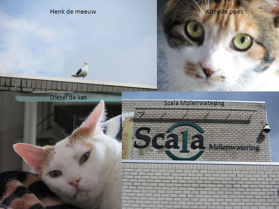 Henk de meeuw Diesel de kat Scala Molenwatering Kitty de poes