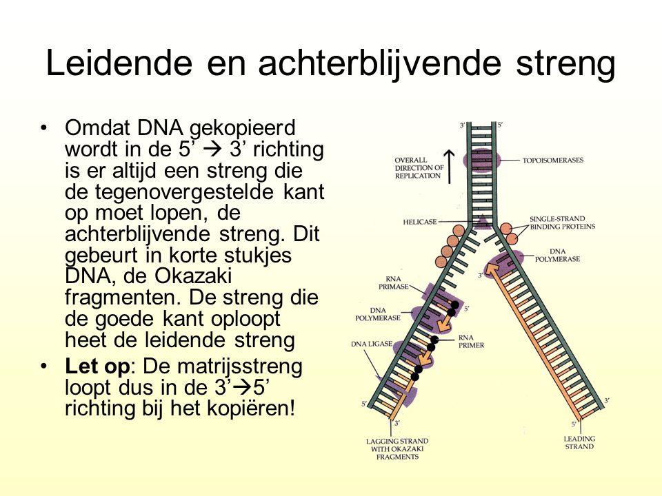 Leidende en achterblijvende streng Omdat DNA gekopieerd wordt in de 5'  3' richting is er altijd een streng die de tegenovergestelde kant op moet lop