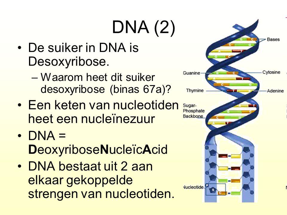 DNA (2) De suiker in DNA is Desoxyribose. –Waarom heet dit suiker desoxyribose (binas 67a)? Een keten van nucleotiden heet een nucleïnezuur DNA = Deox