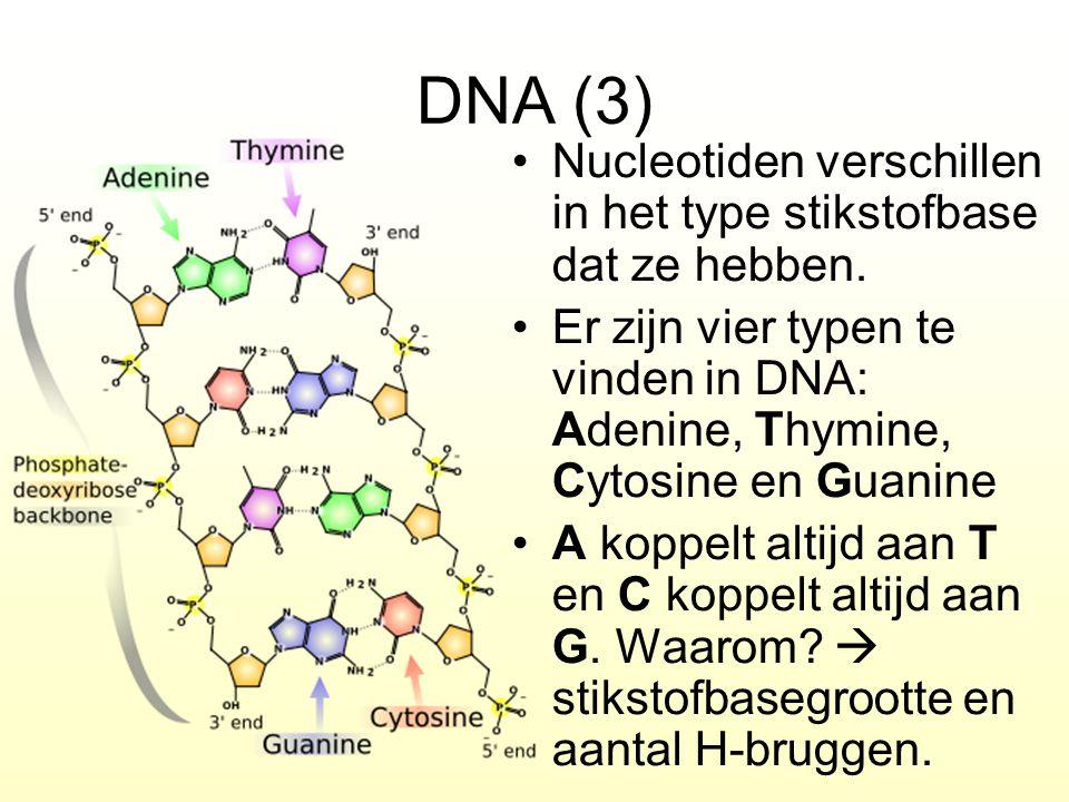 DNA (3) Nucleotiden verschillen in het type stikstofbase dat ze hebben. Er zijn vier typen te vinden in DNA: Adenine, Thymine, Cytosine en Guanine A k