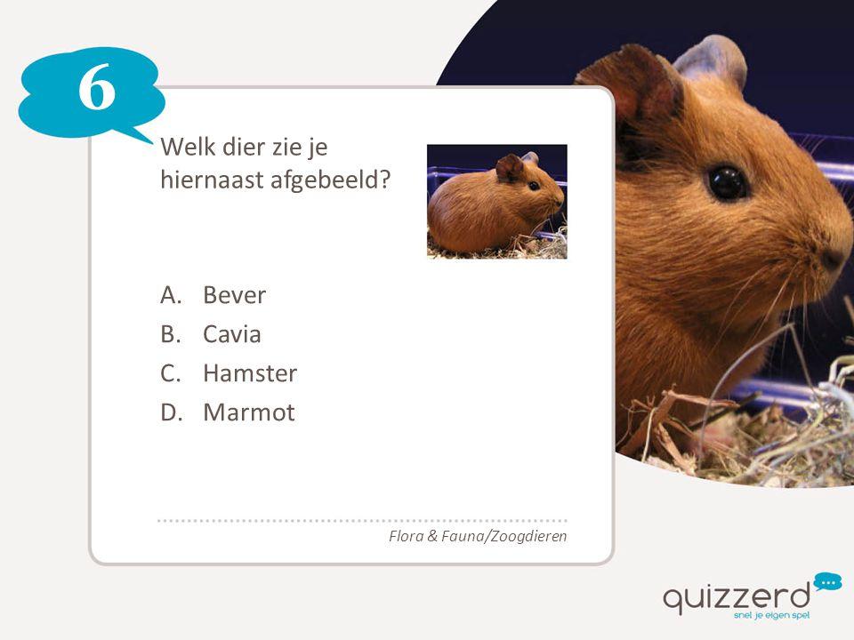 6 Welk dier zie je hiernaast afgebeeld? A.Bever B.Cavia C.Hamster D.Marmot Flora & Fauna/Zoogdieren