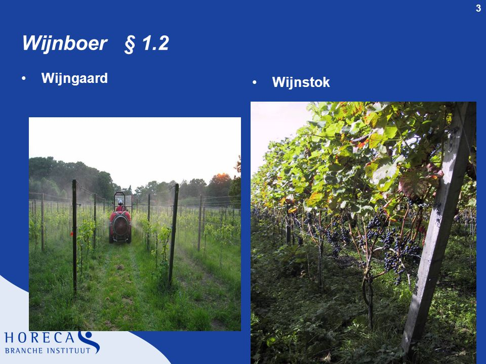 3 Wijnboer § 1.2 Wijngaard Wijnstok