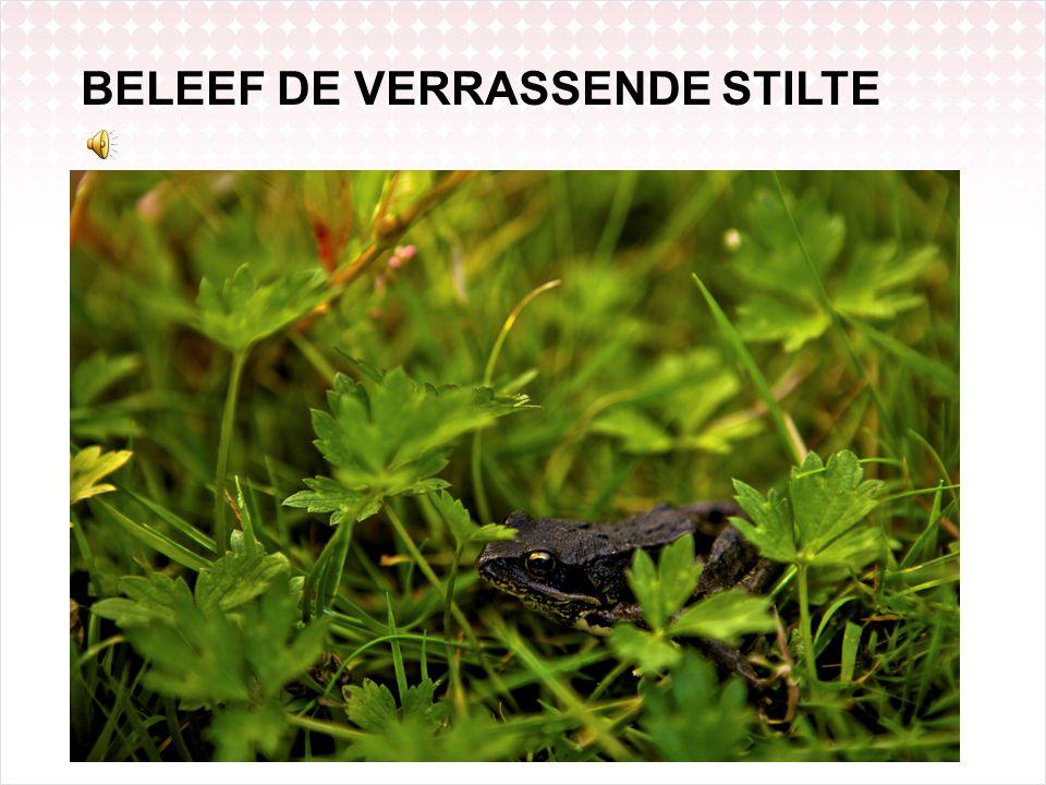 BELE EF DE STILT E ! BELEEF DE VERRASSENDE STILTE