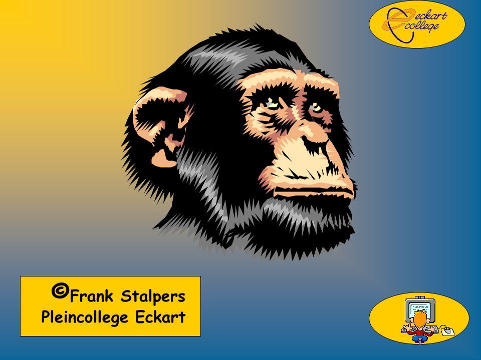 © Frank Stalpers Pleincollege Eckart