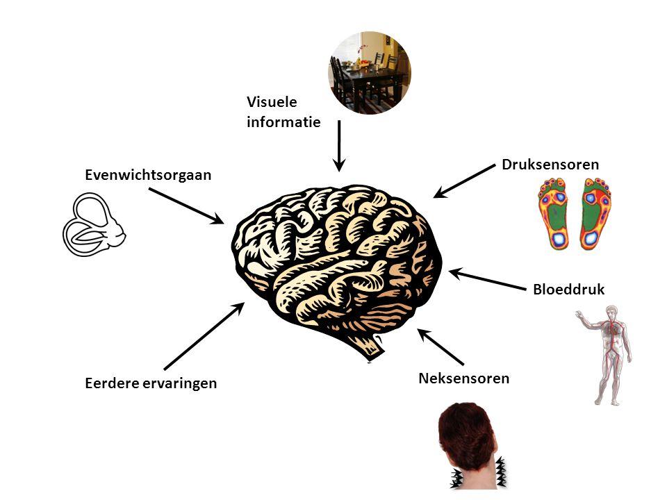 Evenwichtsorgaan Neksensoren Visuele informatie Druksensoren Bloeddruk Eerdere ervaringen