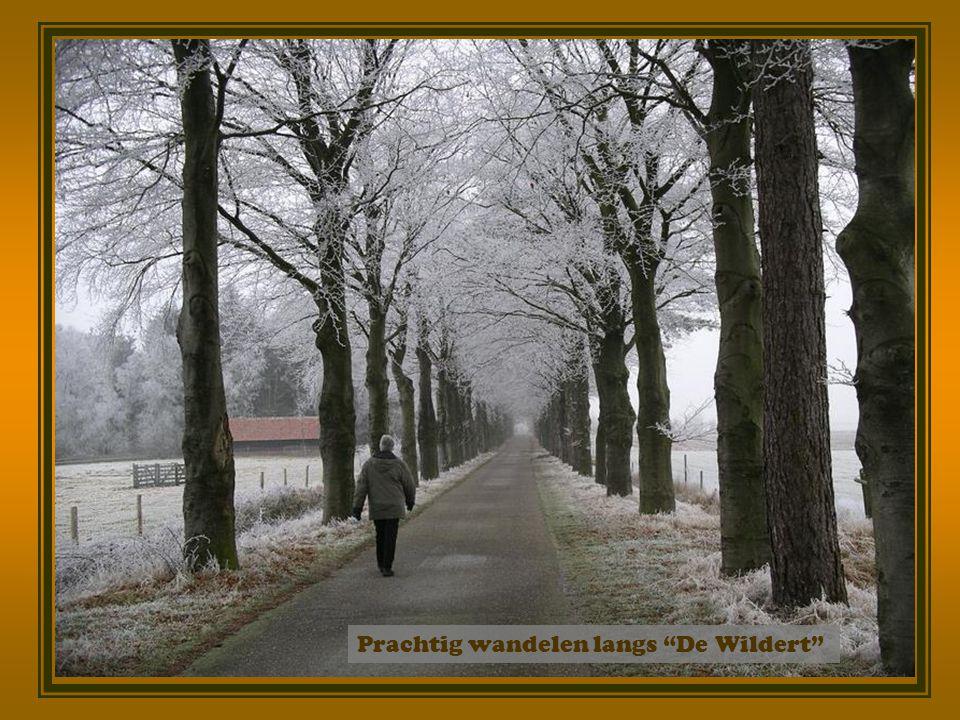 De winter staat voor de deur Opnieuw de schapen op De Wildert