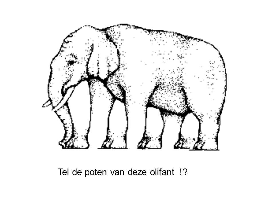 Tel de poten van deze olifant !?