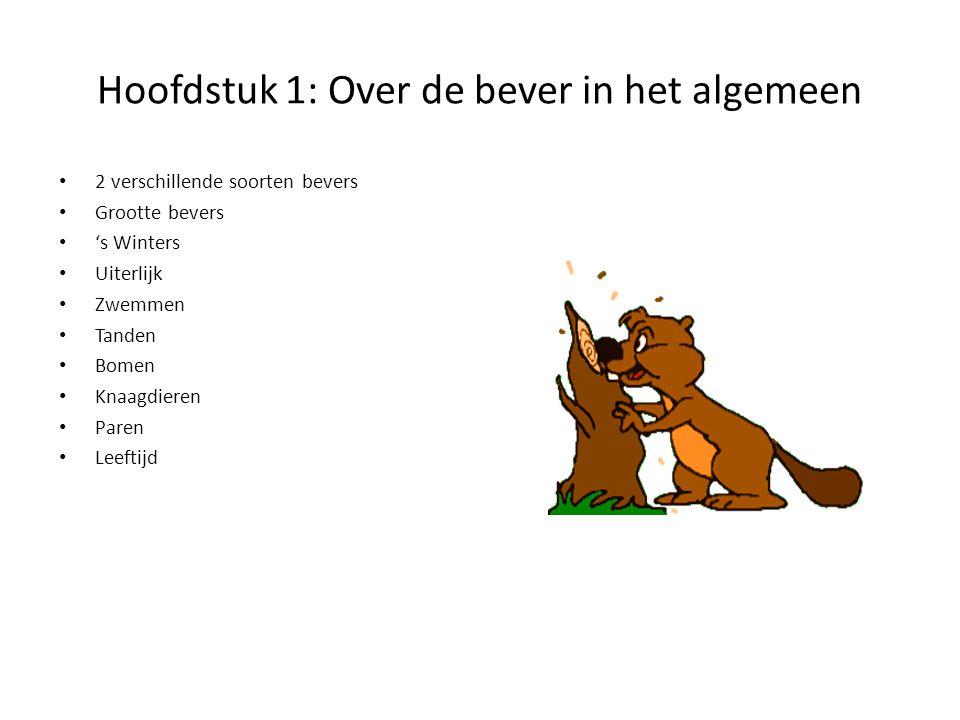 Hoofdstuk 1: Over de bever in het algemeen 2 verschillende soorten bevers Grootte bevers 's Winters Uiterlijk Zwemmen Tanden Bomen Knaagdieren Paren L