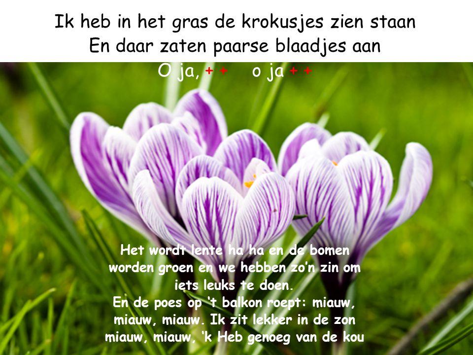 Ik heb in het gras de krokusjes zien staan En daar zaten paarse blaadjes aan O ja, + +o ja + + Het wordt lente ha ha en de bomen worden groen en we he