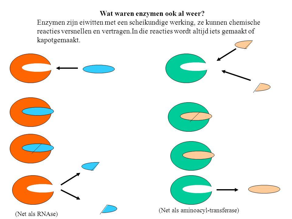 Wat waren enzymen ook al weer? Enzymen zijn eiwitten met een scheikundige werking, ze kunnen chemische reacties versnellen en vertragen.In die reactie