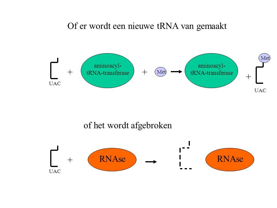 Met UAC aminoacyl- tRNA-transferase ++ aminoacyl- tRNA-transferase + UAC RNAse UAC + RNAse Of er wordt een nieuwe tRNA van gemaakt of het wordt afgebr