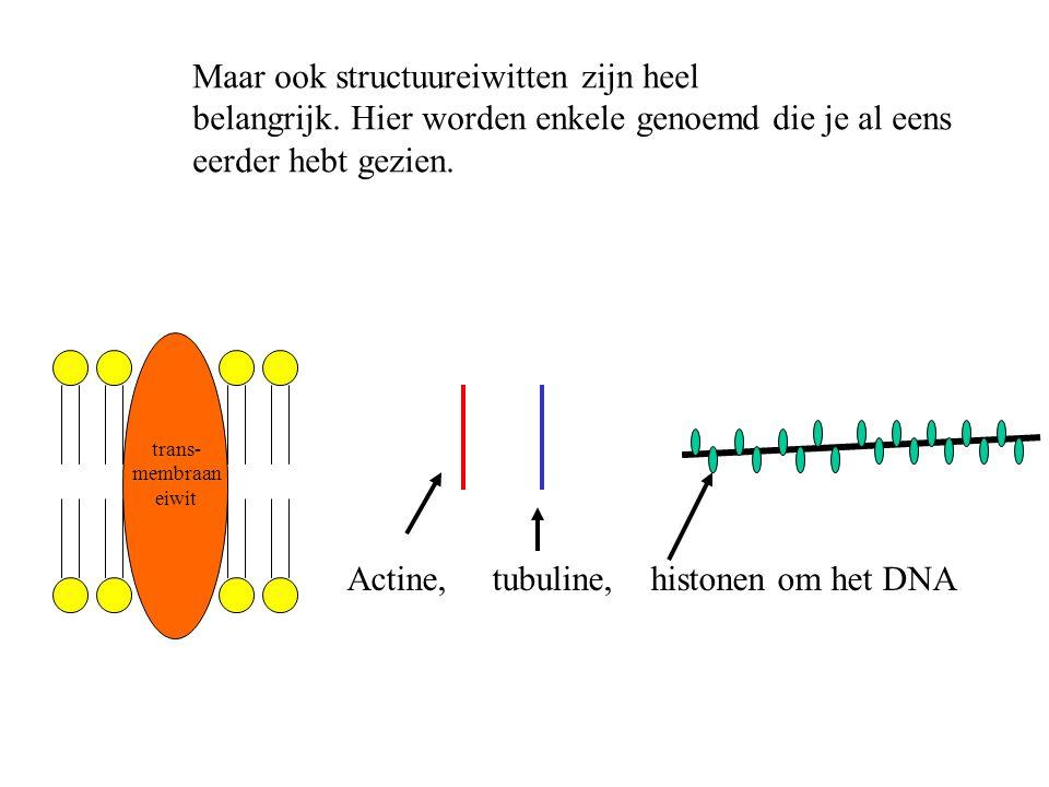 Actine, tubuline, histonen om het DNA trans- membraan eiwit Maar ook structuureiwitten zijn heel belangrijk. Hier worden enkele genoemd die je al eens