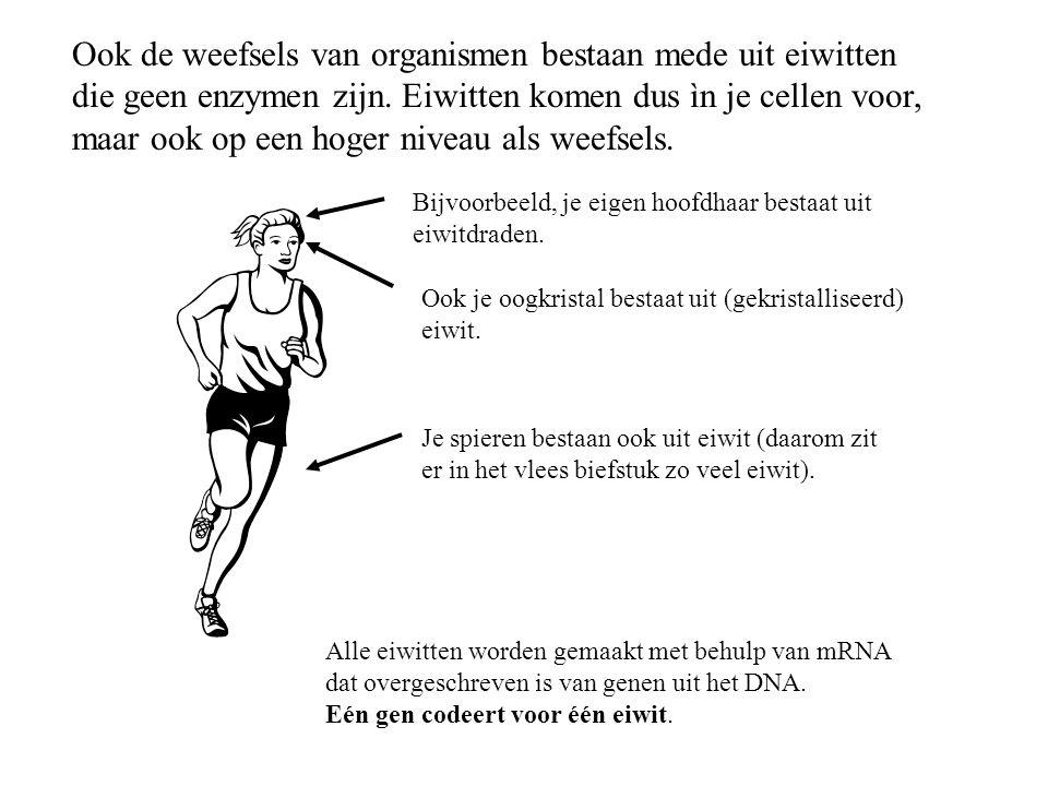 Je spieren bestaan ook uit eiwit (daarom zit er in het vlees biefstuk zo veel eiwit). Ook de weefsels van organismen bestaan mede uit eiwitten die gee