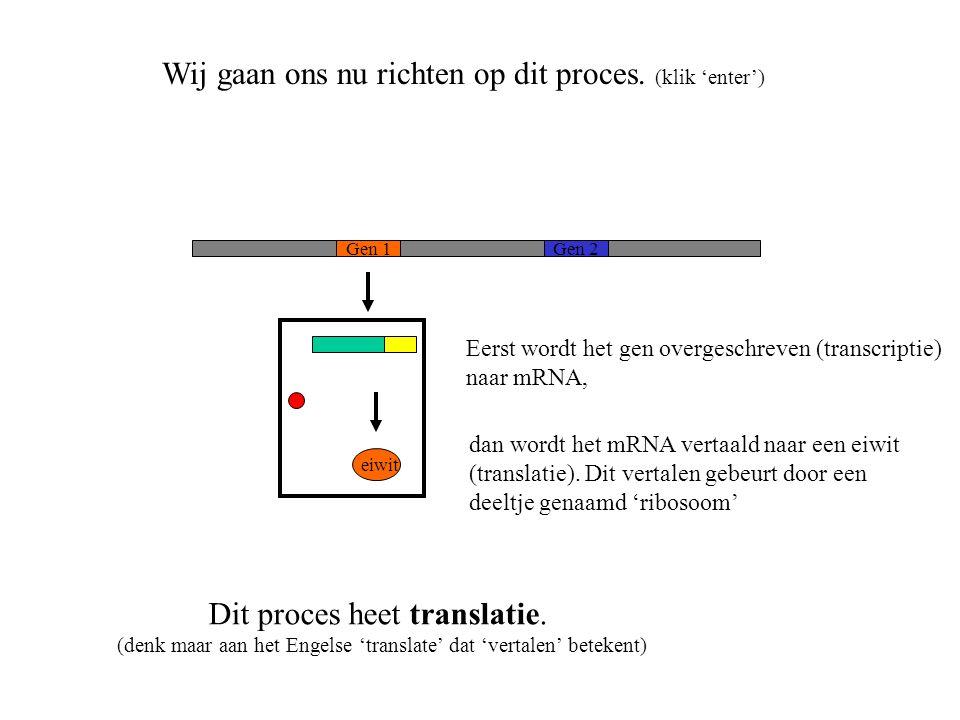 eiwit Gen 1Gen 2 Wij gaan ons nu richten op dit proces. (klik 'enter') Dit proces heet translatie. (denk maar aan het Engelse 'translate' dat 'vertale