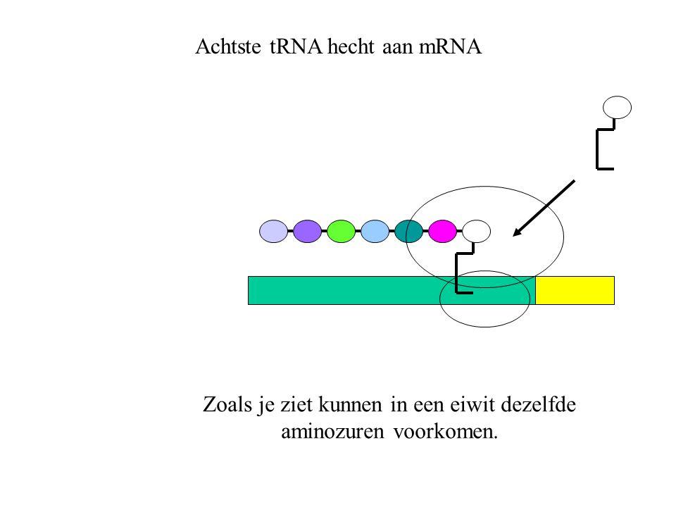 Achtste tRNA hecht aan mRNA Zoals je ziet kunnen in een eiwit dezelfde aminozuren voorkomen.