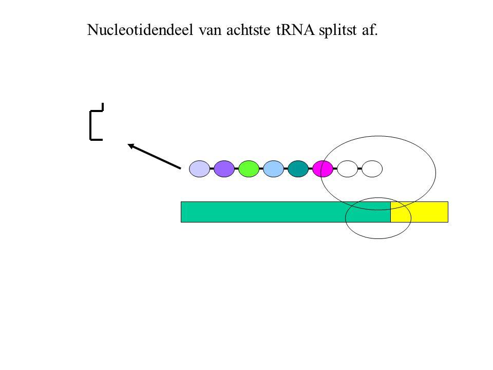 Nucleotidendeel van achtste tRNA splitst af.