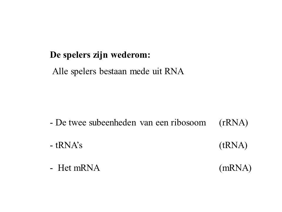 De spelers zijn wederom: - De twee subeenheden van een ribosoom (rRNA) - tRNA's (tRNA) - Het mRNA(mRNA) Alle spelers bestaan mede uit RNA