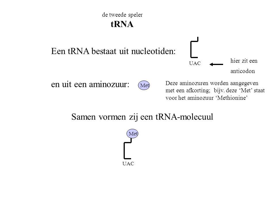de tweede speler tRNA Een tRNA bestaat uit nucleotiden: en uit een aminozuur: Samen vormen zij een tRNA-molecuul UAC hier zit een anticodon Met UAC De