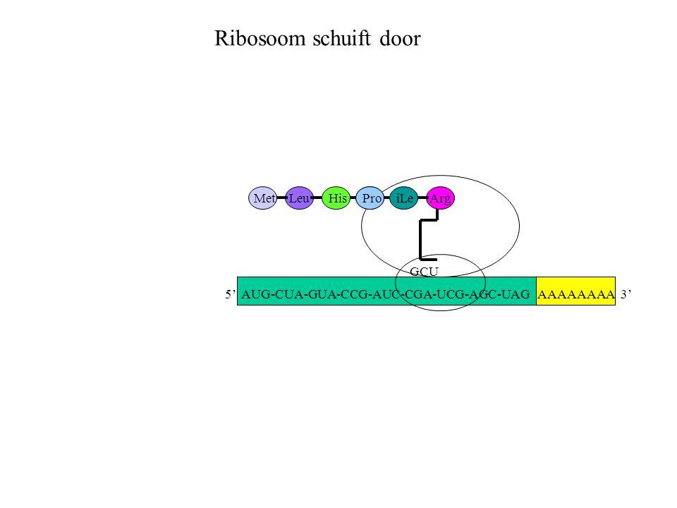 AAAAAAAA 3' MetLeuHisProiLe GCU Arg Ribosoom schuift door 5' AUG-CUA-GUA-CCG-AUC-CGA-UCG-AGC-UAG
