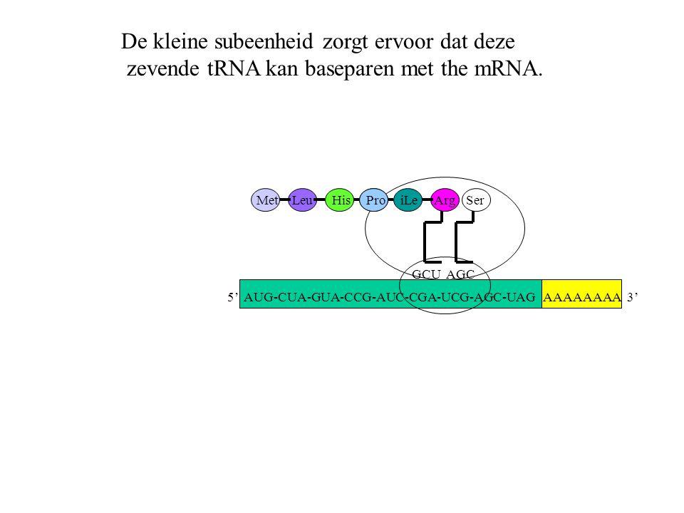 AAAAAAAA 3' MetLeuHisProiLe GCU Arg AGC Ser De kleine subeenheid zorgt ervoor dat deze zevende tRNA kan baseparen met the mRNA. 5' AUG-CUA-GUA-CCG-AUC