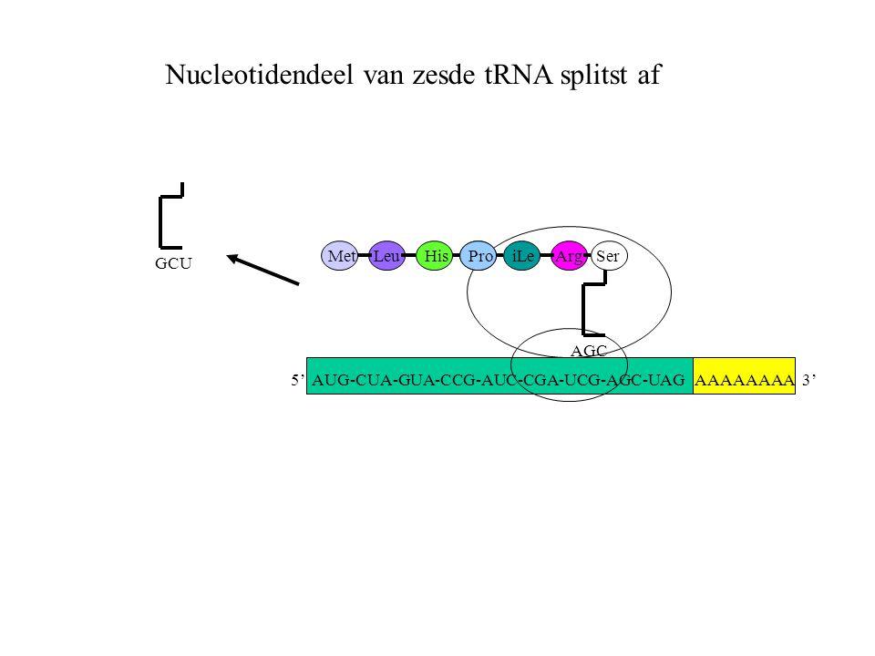 AAAAAAAA 3' MetLeuHisProiLeArg AGC Ser GCU Nucleotidendeel van zesde tRNA splitst af 5' AUG-CUA-GUA-CCG-AUC-CGA-UCG-AGC-UAG